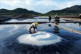 Сбор морской соли