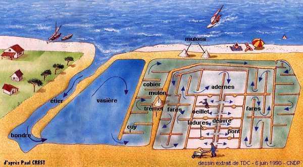 Производство морской соли