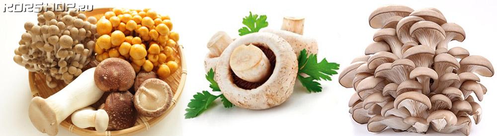белог грибы шиитаке намеко эноки вешенки шампиньоны