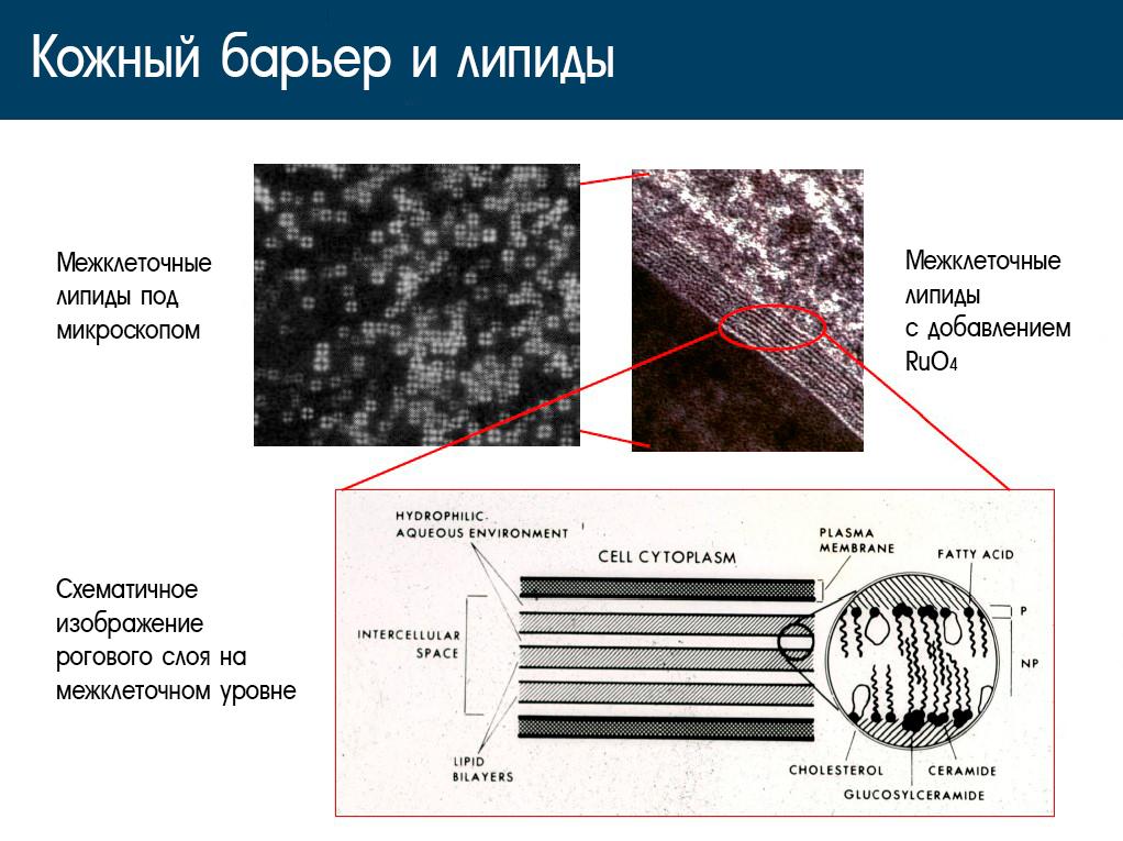 Действие многослойной эмульсии Atopalm.