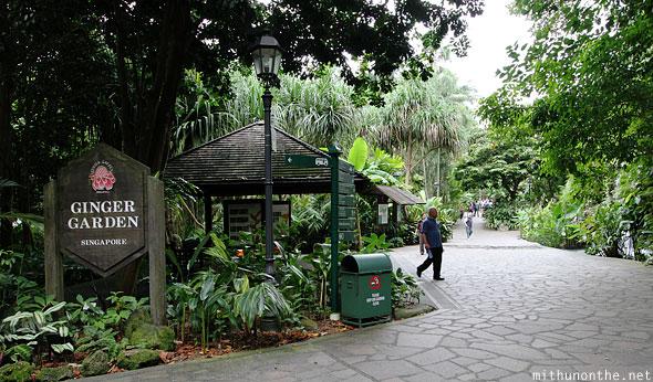 Сад имбиря в Ботаническом саду в Сингапуре